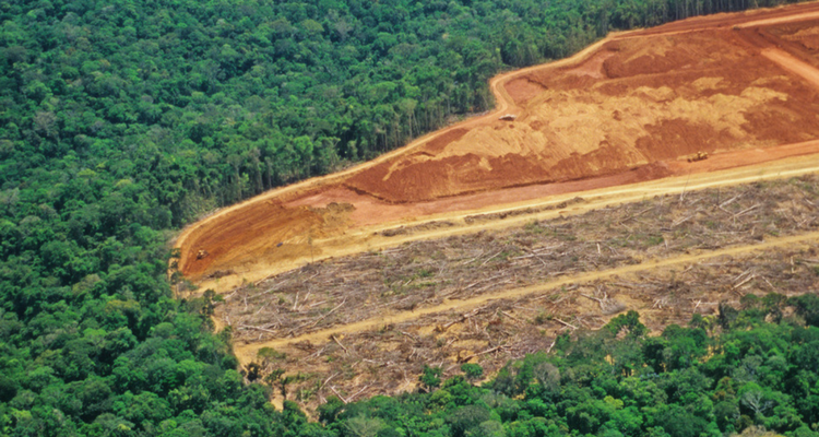 Defrisarile din Amazon